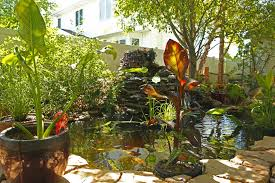 Tropical Plants For Garden - tropical gardens articles gardening know how