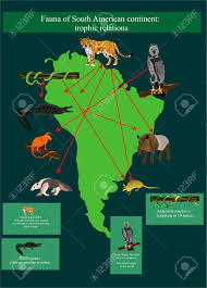 Maps Of South America by Map Of South America With It U0027s Fauna Biodiversity Of Animals