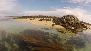 New Jersey snorkeling images Snorkeling les ecrehous jersey aquatic discovery jpg