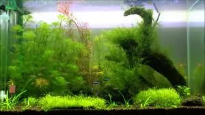 60x45x45 fish u0026plants aquarium home decorations youtube