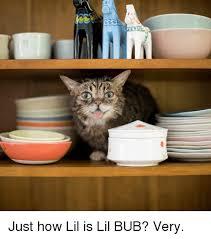 Lil Bub Meme - 25 best memes about lil bub lil bub memes