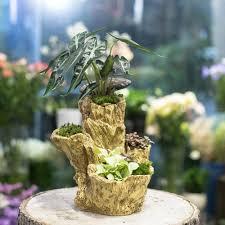 driftwood plant pots promotion shop for promotional driftwood