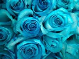 teal roses how to make blue green and purple roses