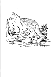 grey fox coloring page color grey gray silver pinterest