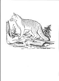 grey fox coloring page color grey gray silver pinterest