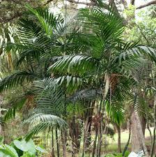 5 plants that clean the air green ribbon