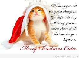 cute christmas quotes for cards christmas lights card and decore