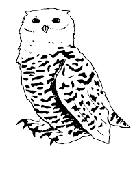 snowy owl free coloring pages on art coloring pages