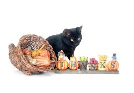 thanksgiving cat helping you create the you were born to live