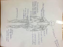 muscle labeling worksheet worksheets