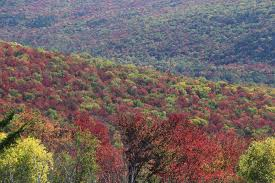 New York State Fall Foliage Map by 29 Sept Fall Foliage Report New England Fall Foliage