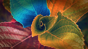 colors of leaves wallpapers hd wallpapers