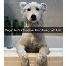 Funny Animal Memes Tumblr - funny pictures memes cool qoutes jokes