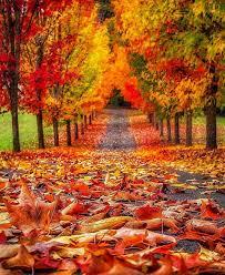 best 25 autumn colours ideas on pinterest
