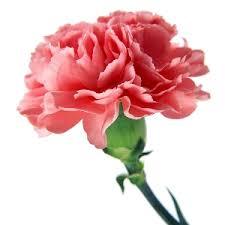 Bulk Flowers Wholesale Flowers Online Bulk Flowers Online 48longstems