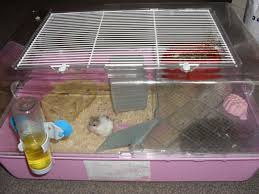 Hamster Cages Petsmart 2 X Russian Dwarf Hamsters And A Cage For Sale Torquay Devon