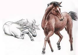 horse sketches ii by vaksine on deviantart