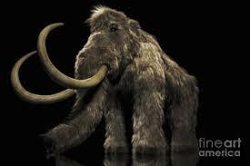 wooly mammoth art fine art america