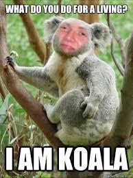 High Koala Meme - what do you do for a living i am koala 10 koala quickmeme