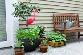 patio gardening for beginners u2013 smashingplates us