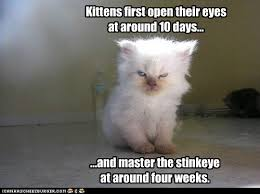 Cat Facts Meme - lolcats timeline lol at funny cat memes funny cat pictures