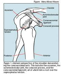 Bench Press Shoulder Impingement Shoulder Impingement Part 2 What Happens At The Shoulder Joint
