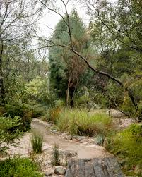 native plant nursery adelaide a wander through one of australia u0027s oldest native gardens with