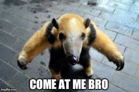 Anteater Meme Generator - saw this anteater on r aww and this is what came to mind imgflip