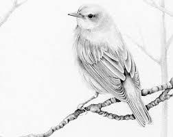 bird pencil drawing fine art giclee print of my by abitofwhimsyart