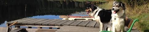 gewicht australian shepherd 7 monate welpenfotos a wurf 2013 aussies lodges webseite