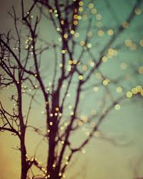 light lights sunset tree twilight twinkle image 86663 on