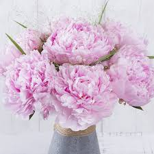 The Pink Peonies by Pink Peonies Peonies By Post Summer Flowers By Post Bunches
