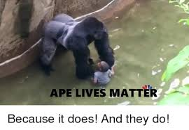 Ape Meme - ape lives matter because it does and they do doe meme on me me