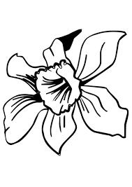 iris details coloring pages hellokids com
