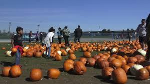 toronto oct 11 pumpkinfest at york s downsview park on