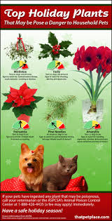 holiday plants that are toxic to your pets visual ly