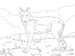 iberian wolf coloring page free printable coloring pages