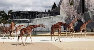 bureau de change vincennes 21st century zoo is not a park the local
