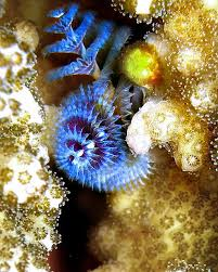 596 best under the sea images on pinterest nature ocean life