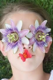 Rainforest Passion Flower - passion flower facts