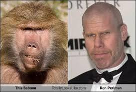 Baboon Meme - this baboon totally looks like ron perlman cheezburger funny