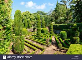 beautiful decorative green bushes and trees in botanic garden stock