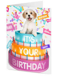 your birthday cavachon puppy emerges from a giant birthday cake