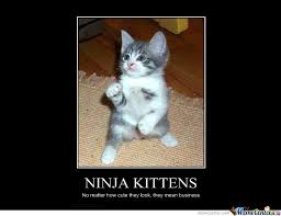 Cute Kittens Meme - ninja kittens nomatter how cute they look they mean business