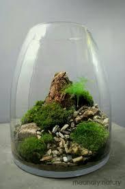 525 best terrarium inspiration images on pinterest plants mini