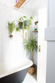 Home Decorating Plants Best Plants That Suit Your Bathroom Fresh Decor Ideas