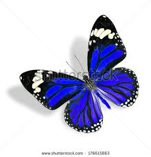 free photos the flying blue butterfly with shadow isolated on