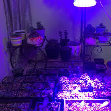 red and blue led grow lights ultrafire usb plant grow light 4w 12 led full spectrum hydroponics