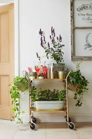8 edibles you can grow indoors diy network blog made remade diy