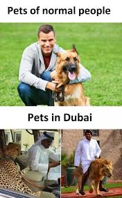 Dubai Memes - dopl3r com memes pets of normal people pets in dubai